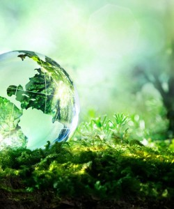 A photo of a glass globe in a lush setting.